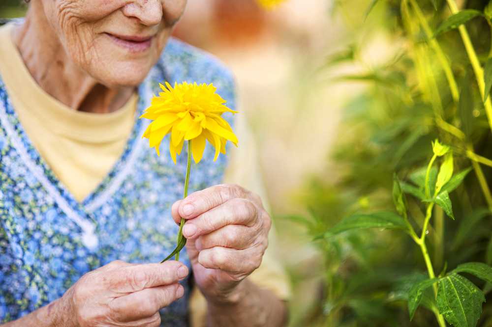 senior living gardening and memory care senior woman with flower in garden