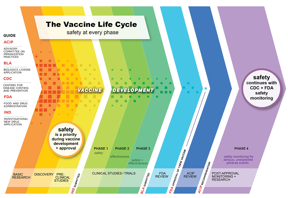 The vaccine life cycle for COVID-19