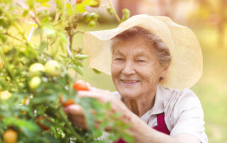 Senior woman outside in garden, happy and picking tomatoes
